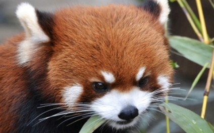 Firefox turns 10